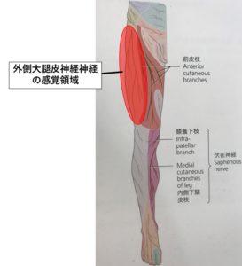 腿 痛み 太 付け根 足の付け根が痛い:医師が考える原因と対処法|症状辞典